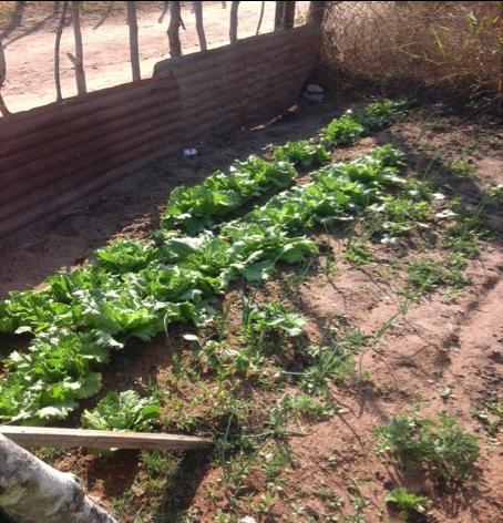 6-garden