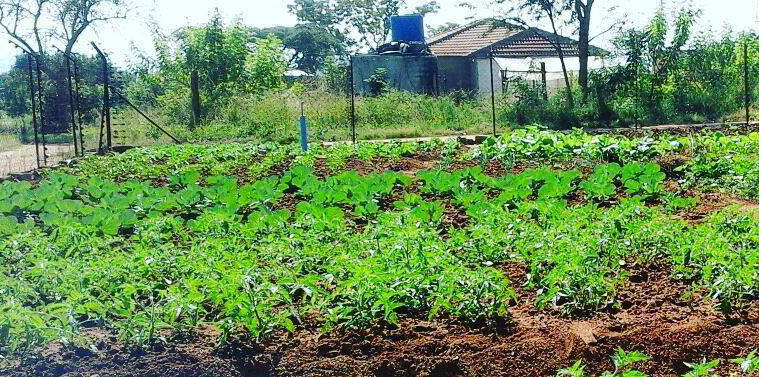 5. Lula garden